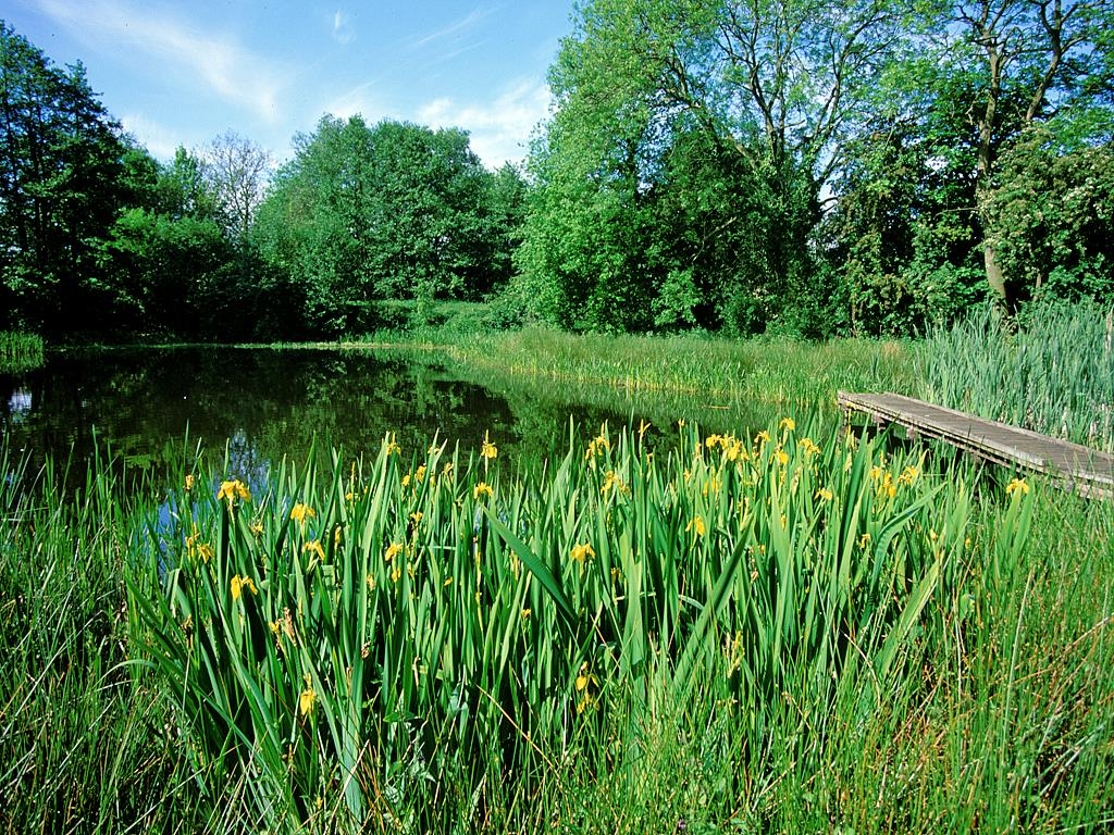 Hassacarr pond and nature reserve, Dunnington